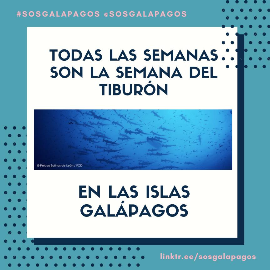 Todas Las Semanas Son La Semana del Tiburón en Las IslasGalápagos