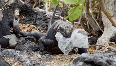 Galapagos: 36 species are at risk from plasticcontamination