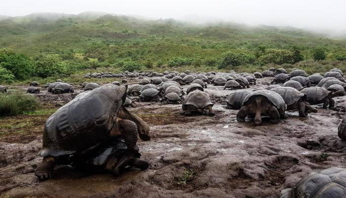 The Galapagos National Park celebrates 62 years with announcements of new projects for itsconservation