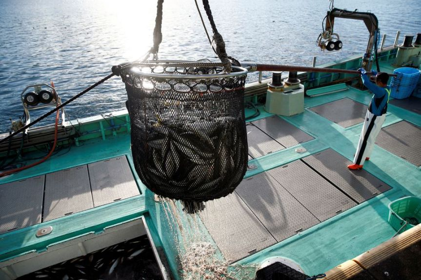 Reuters Explainer: What's at stake in WTO talks on fishingrules?