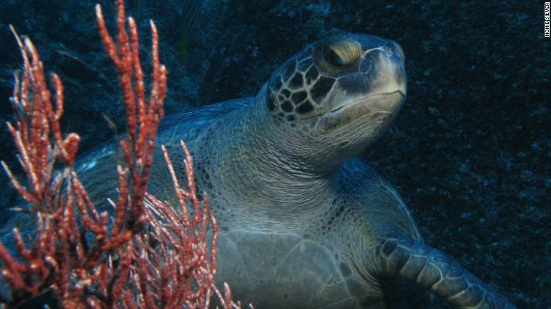 Scientists are fighting to protect a shark and turtle 'superhighway'