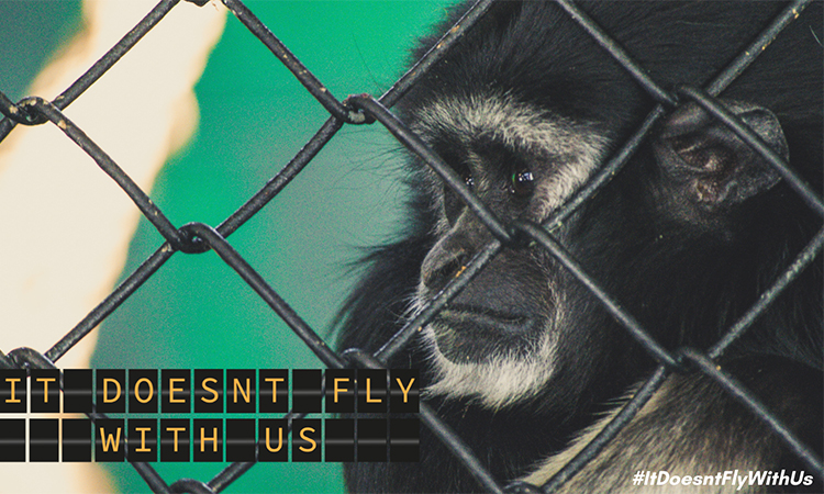 """""""It Doesn't Fly With Us"""": New campaign sees aviation industry stepping up to protect threatenedwildlife"""