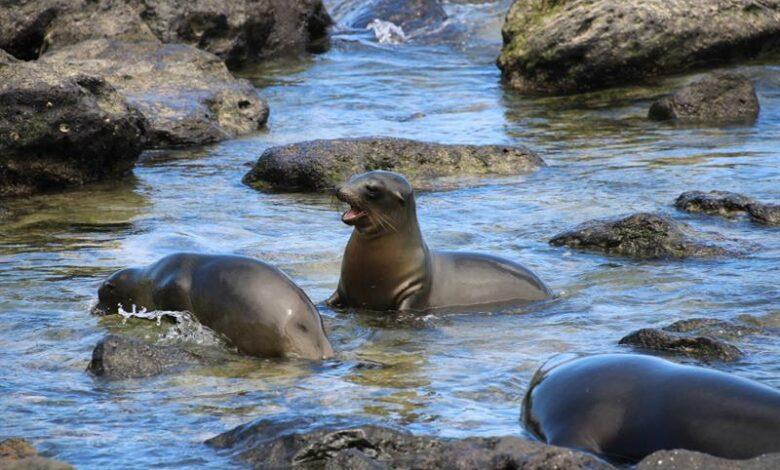 Galapagos, between pandemic's onslaught and environmentalrestrictions