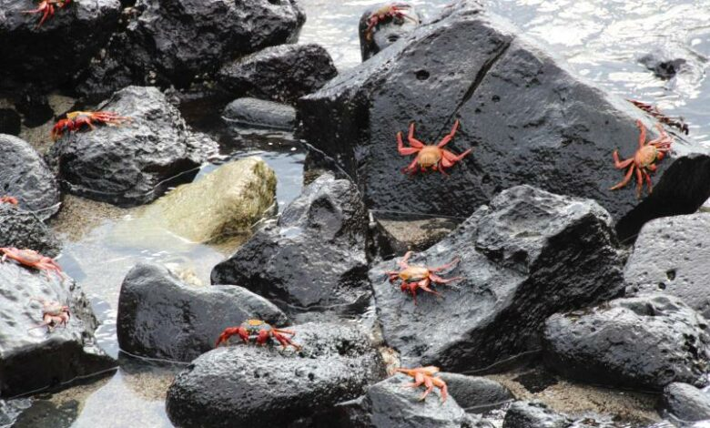 Scientists compiling genetic catalog of Galapagosspecies