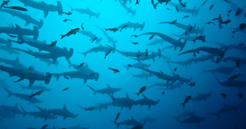 Conservation Community Calls for Expanding the Galapagos and Cocos MarineReserves